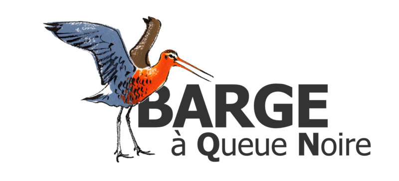 Logo Site Internet Barge À Queue Noire