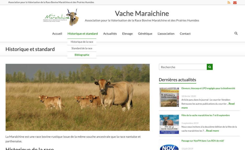 Vache Maraichine 2 Site Internet Association Nature