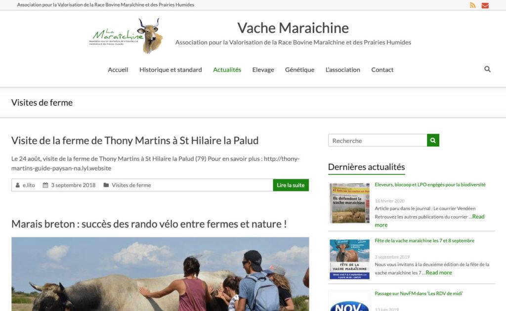 Vache Maraichine 3 Site Vitrine Asso Biodiversite