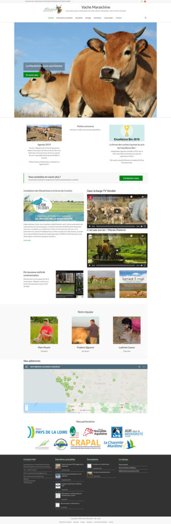 Vache Maraichine 4 Creation Site Internet Association
